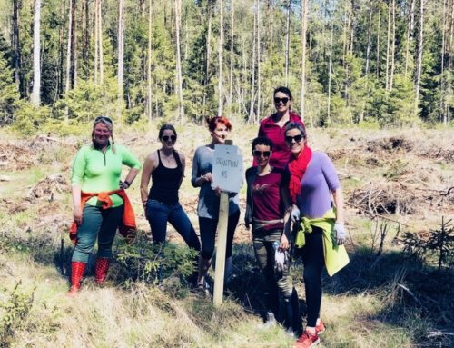 Printoni metsaistutuspäev koostöös RMK-ga
